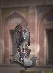 matrix kabooter2 (Waheed Khalid) Tags: pakistan bird art matrix architecture photography folk traditional flight classical khalid lahore waheed studioq waheedkhalid jalalspagesmasterpiecealbum waizrkhan