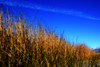 Reeds (Tonym1) Tags: