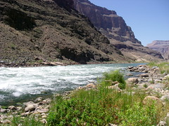 Grand Canyon at Tapeats Rapids looking west (Al_HikesAZ) Tags: park camping arizona 15fav water river landscape nationalpark colorado hiking quote grandcanyon grand canyon hike rapids rafting national backpacking backpack backcountry raft soe hikes inthecanyon  grandcanyonnationalpark coloradoplateau literaryreference gcnp awesomenature thunderriver outdoorbeauty johnwesleypowell unature tapeats alhikesaz   belowtherim