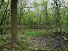 The Big Woods (Jim Frazier) Tags: trees nature forest illinois pond woods flora scenery natural v100 birding may swamp batavia kane fermilab ephemeral q3 wetland 2007 ferminationalacceleratorlaboratory birdcount ephemeralpond bataviaarea jimfraziercom