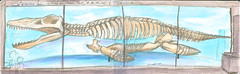 "Return to HMNH (with watercolor goodness) - ""It's a Liopleurodon, Charlie!"""