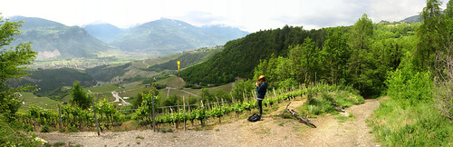 Vineyards near St Leonard, Switzerland