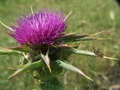 20070519 Tiny Bee