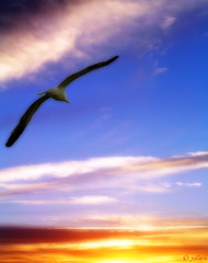 free as a bird (Orton) (julioc.) Tags: blue sunset pordosol sky bird portugal beautiful animal animals ilovenature freedom pretty quality seagull algarve orton julioc challengeyouwinner superaplus aplusphoto superhearts photographybyjulioctheblog j5074