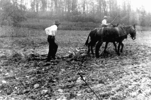 harrowing the field, 1919