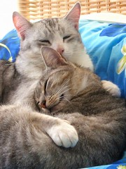 Basil & Bella2 (Monique Barber) Tags: pet cats cute love animal cat snuggle hug kitten sleep kitty kittens cuddle cosy thebiggestgroupwithonlycats best100pictures