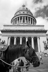 Capitolio (R. Motti) Tags: travel blackandwhite bw horse bandeira flag havana cuba pb capitolio habana polarizer cavalo pretoebranco motti lahabana oldhavana habanavieja elcapitolio ciudaddelahabana sigma1770 ricardomotti