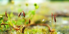 Alien Moss Landscape 2