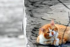 Gato triste - by Fábio Pinheiro
