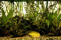 fish green water ilovenature aquarium poetry hobby aquascape planted