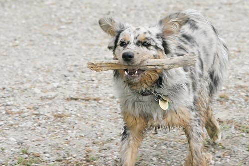 Stick!