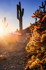 Sonoran Desert (Pritha Photography) Tags: sunset vintagelens mflenses vivitar vivitarmaniac kironvivitar arizona arizonacactus backlit nature naturephotography landscape