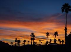 Feathery Sunrise with Palms.jpg (melissaenderle) Tags: arizona