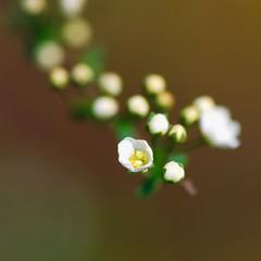 Floral Helix - by bogenfreund