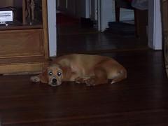 Lilla napping alone (chris.c.hall) Tags: nap lilla