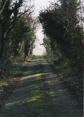 Down the Lane in Kylemore (tinks_panties) Tags: ireland kylemore