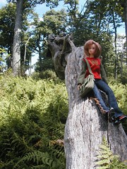 Momoko in Shenandoah National Park (ava111sk/Dollypimp) Tags: park tree nature japan toy virginia doll national collectible shenandoah momoko petworks 02sp