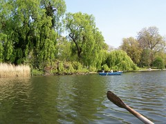 Rowing in Regent's Park