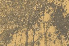 somnis | sueos | dreams | rves | sonhos | sogni | trume |  | dromen |   |   |  |  |  (pablo nilo) Tags: painterly forest sueos bosque dreams wald floresta garraf fort sonhos bosc foresta sogni excursin trume    rves somnis parcnatural    pablonilo