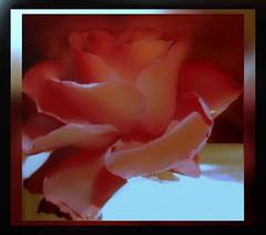 Story of one rose (makunia) Tags: hello bravo kisses labyrinth xox givepeasachance xoxoxox magicdonkey outstandingshots goodmorningkisses artlibre superaplus aplusphoto superbmasterpiece aphroditeisbeautifulbecausesheeatspeasoupo niteniteandcroutondreamstoyouo musketeer2shineon thankyouforthescreenshottheotherday peasoupmakestheworldgoaroundo