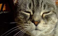 Abby!! (~fb~) Tags: cats sun cat feline tabby abby tabbycat fujifilmfinepixs5600 impressedbeauty abbytabby 250407 25thapril2007