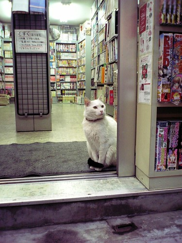 cute white bookstore cat pic