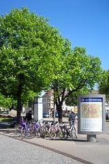 Freiburg chestnuts III