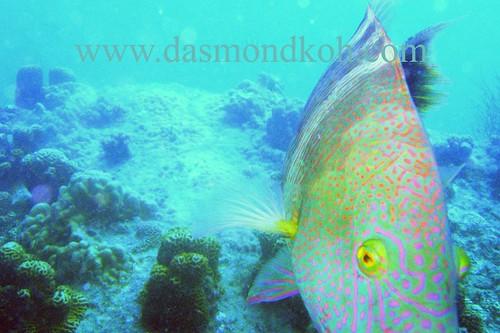 Dive at Koh Tao Island