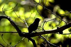 a boo boo (waynespixels) Tags: mountains bird nature colorful pentax bokeh bigma wildlife backlighting sigma50500 naturenotes animaladdiction specanimal k10d pentaxk10d diamondclassphotographer simplyyourbest