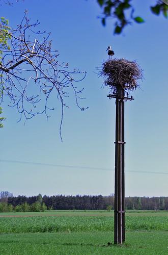 Storks - 2