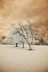 One, Two, Three... (Ethan Killian Photography) Tags: trees ir utah d70 saltlakecity infrared sugarhousepark yourfavorites 18135mmf3556g d70i 24hoursofflickr