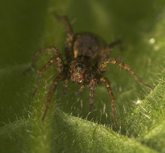 """Spider(15) • <a style=""""font-size:0.8em;"""" href=""""http://www.flickr.com/photos/57024565@N00/486962291/"""" target=""""_blank"""">View on Flickr</a>"""