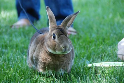 Bunnyfest alert