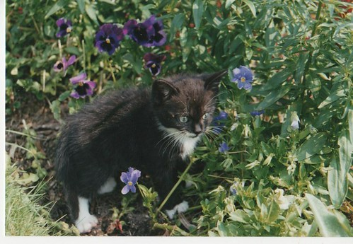 Otis as a kitten