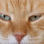 Balthi eyes thumbnail