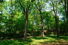 @Central Park 01
