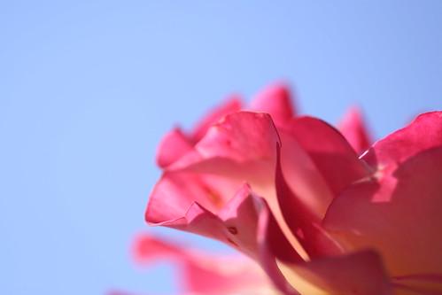 KAYOICHO rose garden