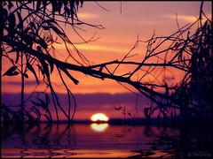 Liquid Sunset (Webgrrl.Biz) Tags: sunset orange water purple branches liquid silhoutte naturesfinest sunrealism specland abigfave impressedbeauty flickrdiamond