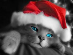 Christmas Cat */* Gatinho Natalino *** + de 40 mil visitas em 1 mes!