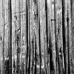 (aaron colon) Tags: wood bw white black color film grain wear used negative worn use staples shards