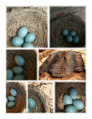 robin's egg chevron