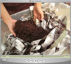 worms! (annieee) Tags: diy worms redwigglers vermicomposting vermiculture composting