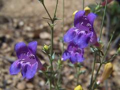 20070527 Wildflowers