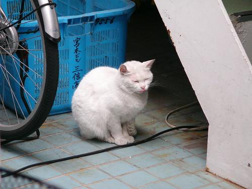 お寿司屋の猫