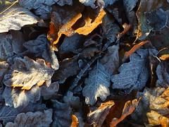 frozen moment (tobltatze) Tags: naturephotography natur frost winter wald woods leavageinfrost frozen wintertime lateautumn magic magisch