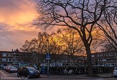 Abrikozenplein (LadyLove1967) Tags: zonsondergang denhaag shetlandponys kleuren bomen roze paars avond mooi kleurrijk stad