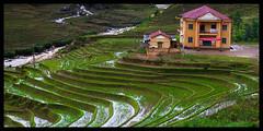 School on the fields (andrew chang) Tags: travel school landscape vietnam ricefields sapa paddyfields