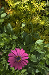 Flower and foliage, Gowanus Nursery
