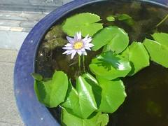 056.一池小花