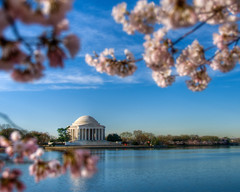 Framed by Cherry Blossoms (Foto Blitz Color) Tags: pink flowers blue trees color colour monument nature water photography dc washington spring flora nikon bravo colorful gallery fine cherryblossoms d200 multicolored hdr jeffersonmemorial tidalbasin the photomatix supershot 5xp of abigfave impressedbeauty frhwofavs bloggedbyabigfave